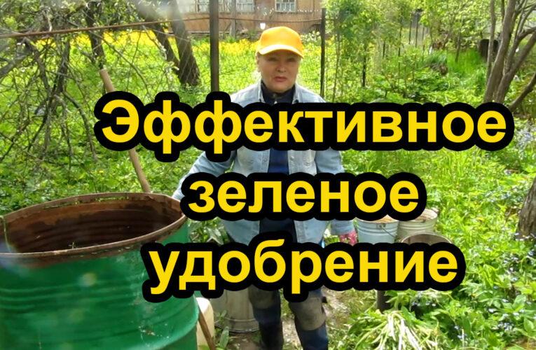 Дачные советы.Супер эффективное зеленое удобрение.