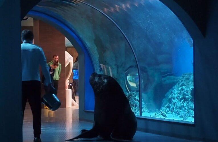 Морской лев проверил готовность «Москвариума» на ВДНХ к открытию для посетителей
